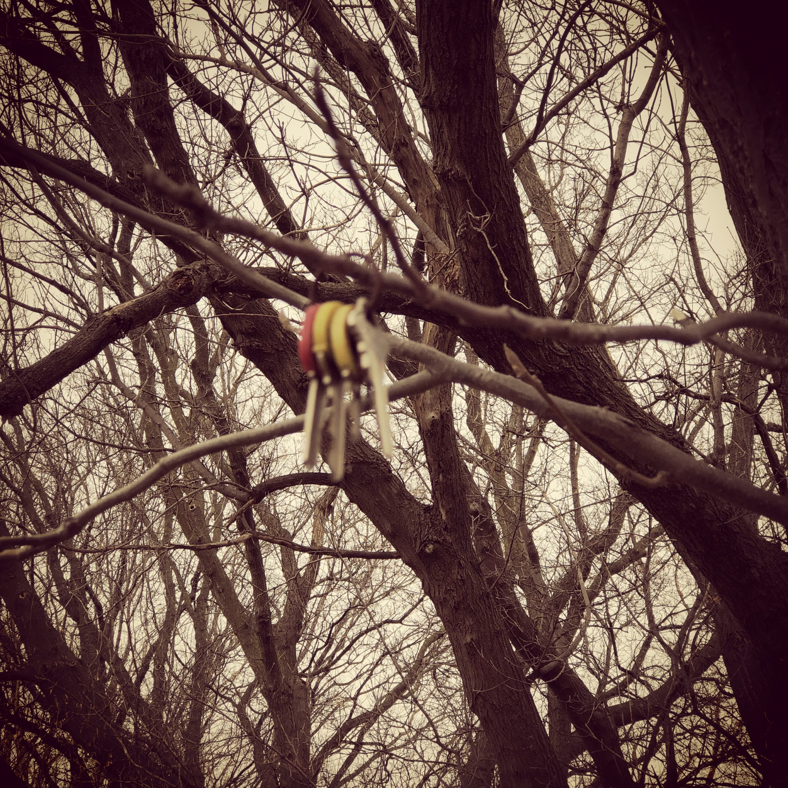 Portia_Keys-in-Tree