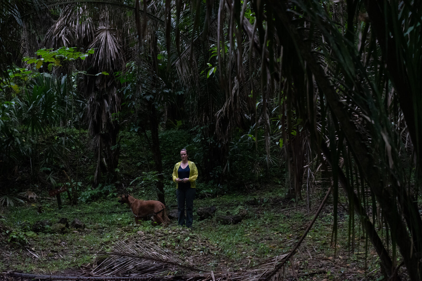 lush green forest with a woman wearing a bright yellow rain jacket with a dog on a leash
