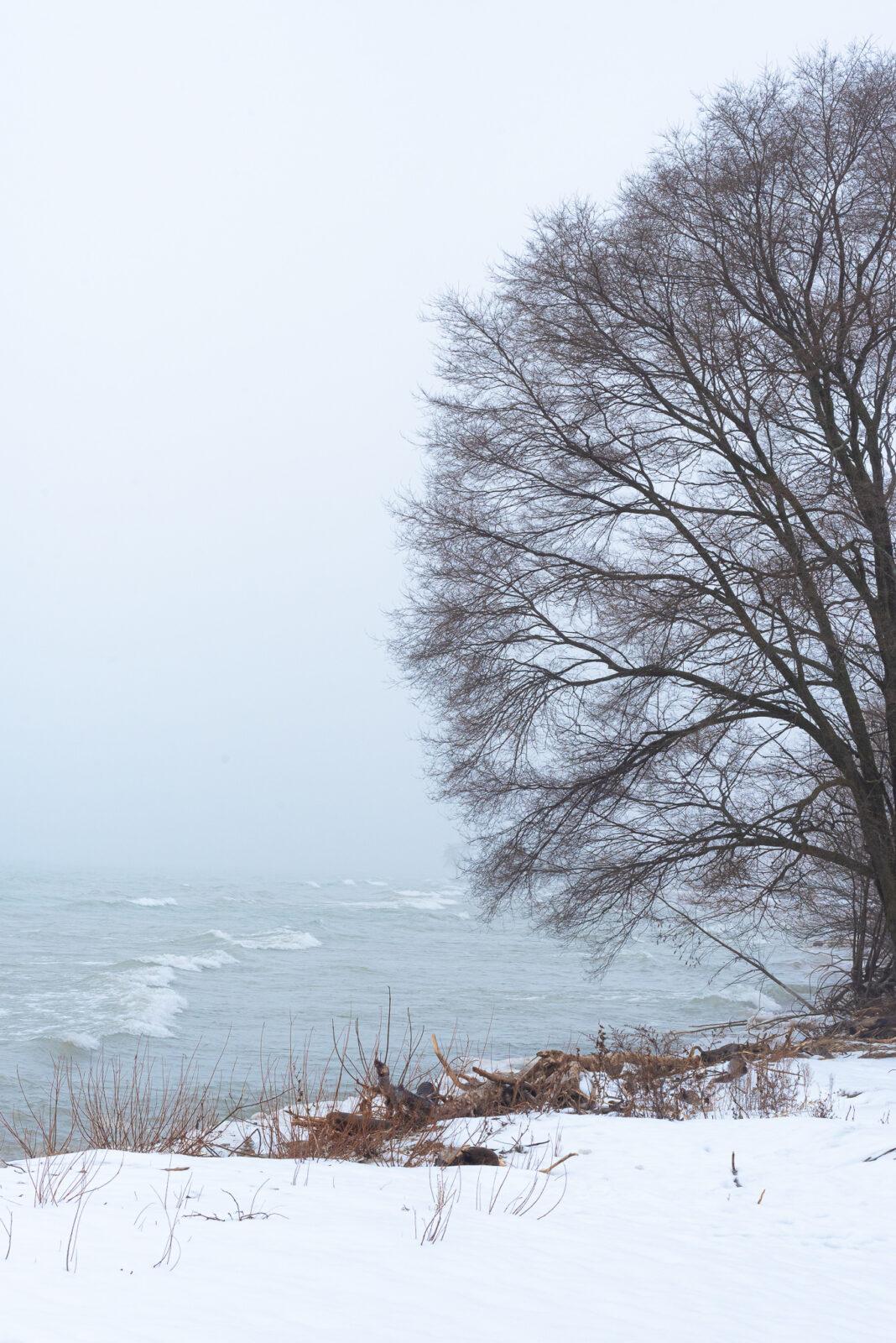 big tree on the snowy bank of Lake Michigan east shore