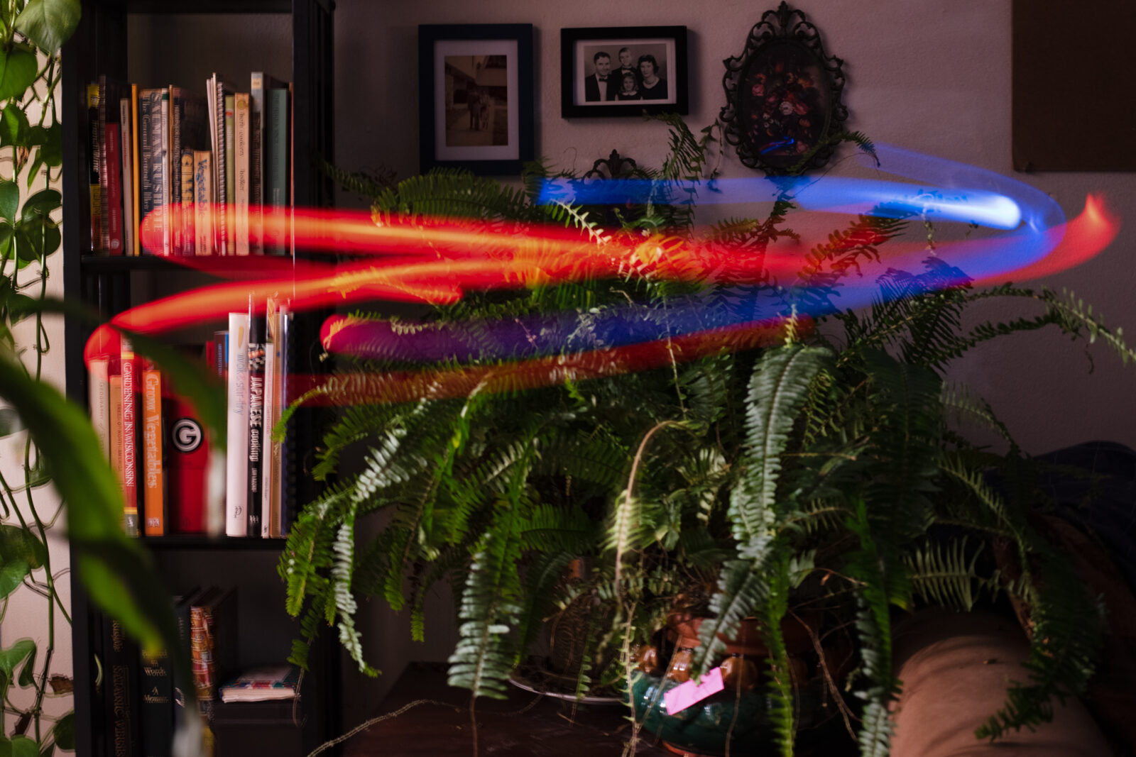 Blue and red light trails hovering over a fern house plant
